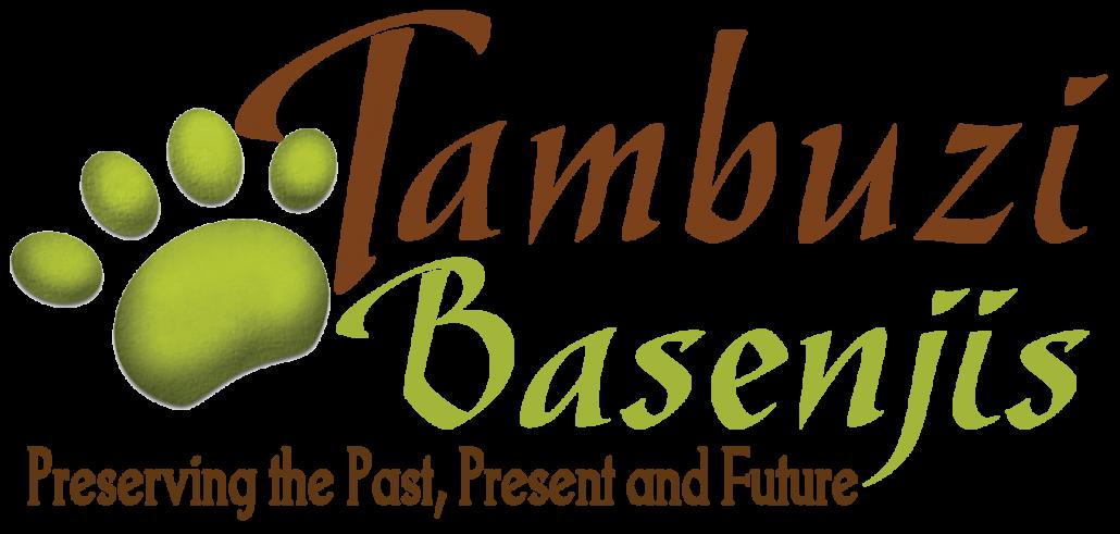 Tambuzi Basenjis