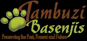 Basenji - Tambuzi Basenji Breeder