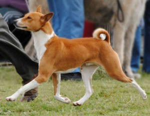 West Gippsland Kennel Association 2014
