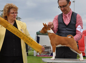 Belgrave and District Kennel Club Show 2015